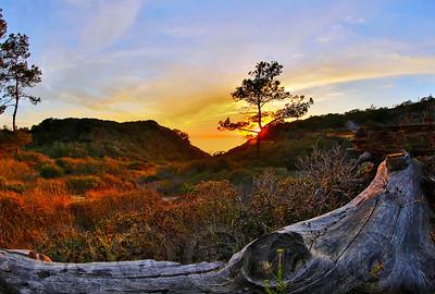 Sunset at Torrey Pines San Diego, CA
