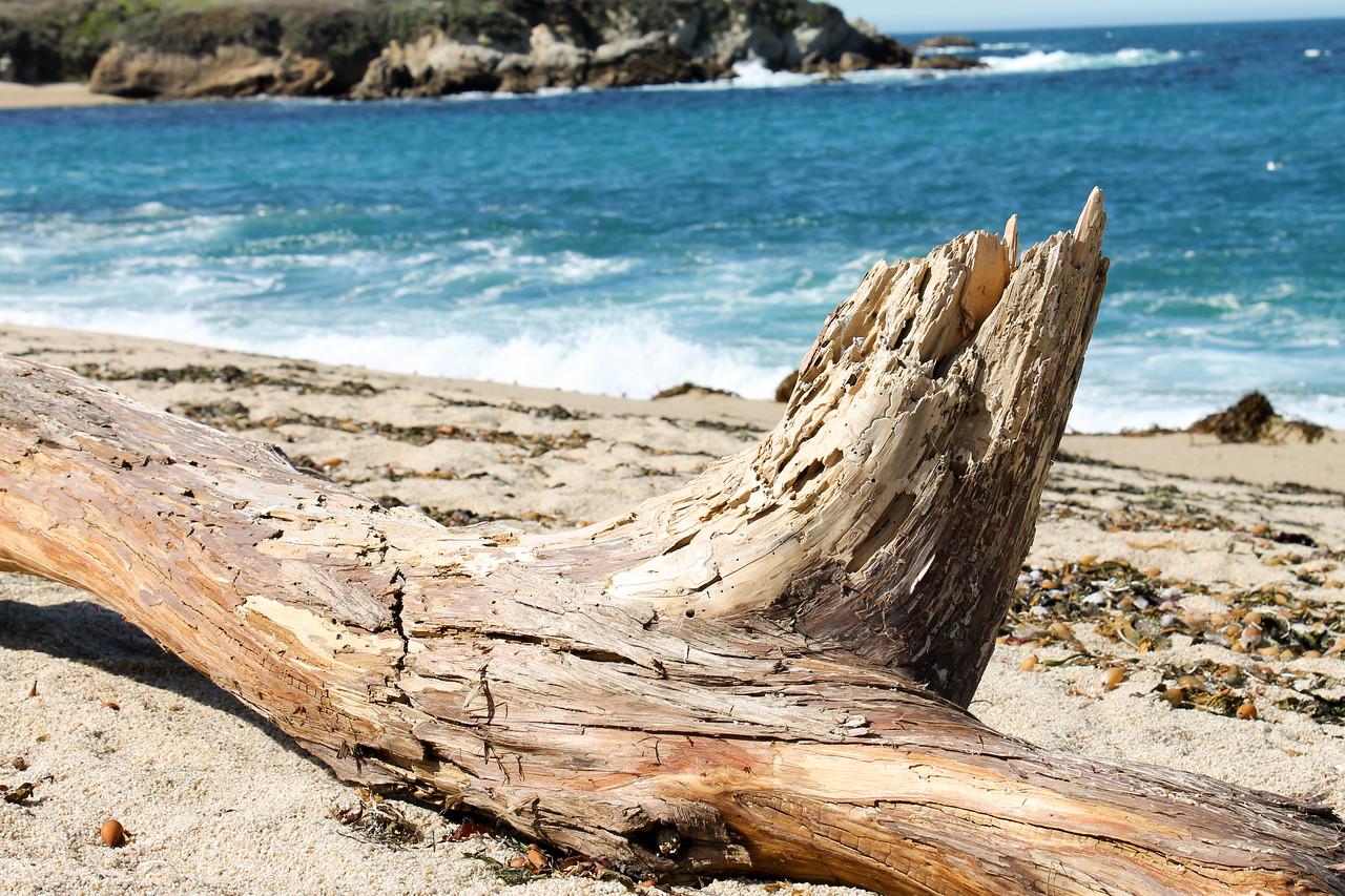 Driftwood on California Beach