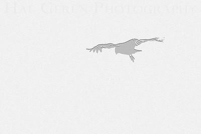 Condor Silhouette Big Sur, California February, 2009 0902BS-C2E1