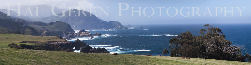 Big Sur coast panorama  with cows in foreground Big Sur, California 1005BS-CP6