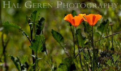 Point Lobos, California 1005BS-F3
