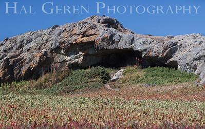 Iceplant and Cave Bodega Bay, California 1207BB-C3