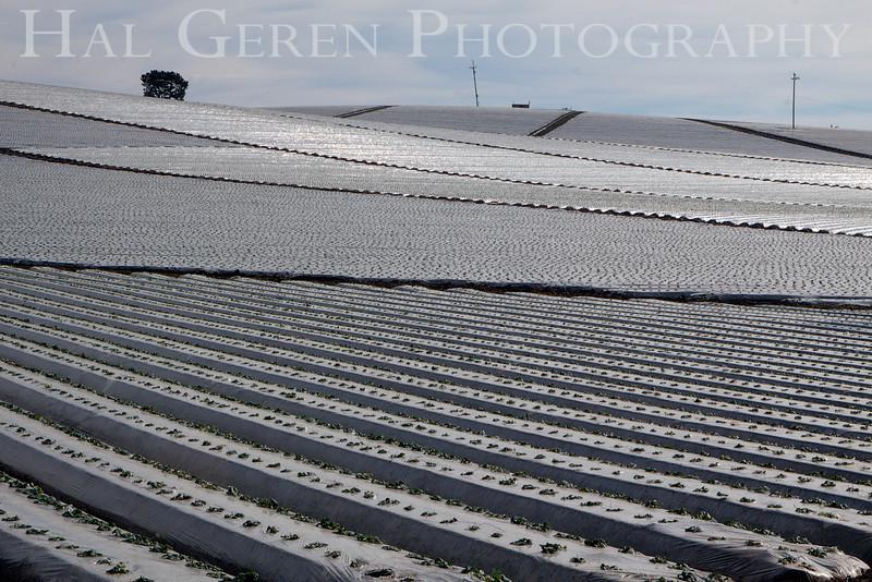 201201 Santa Cruz - Strawberry Fields 4