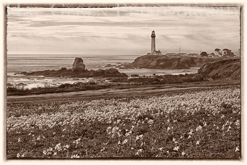 201202 Coast - Pigeon Point HDR 2A BW1