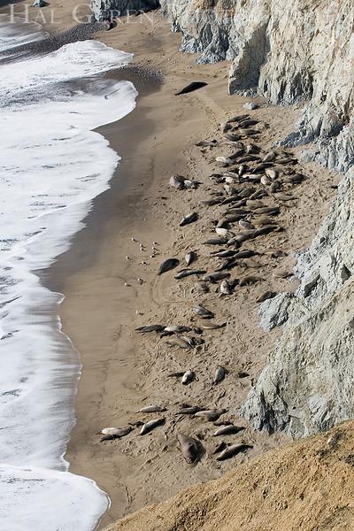 Elephant Seal Colony 1