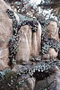 Ice Plant<br /> Point Lobos, California<br /> 0902PL-IP2