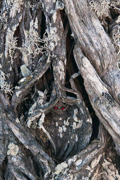 The Watcher<br /> Point Lobos, California<br /> 0902PL-TD1A