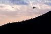 Bird Island Sunset<br /> Point Lobos, California<br /> 0902PL-BIS2
