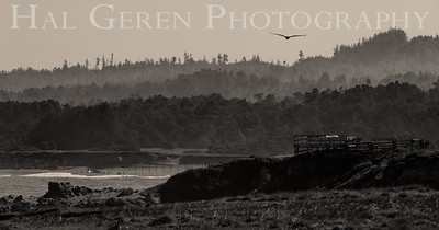 MacKerricher Park Fort Bragg, California 1504FB-MP1BW1