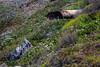 Goat Rock State Beach, California<br /> 1606FR-P1E1