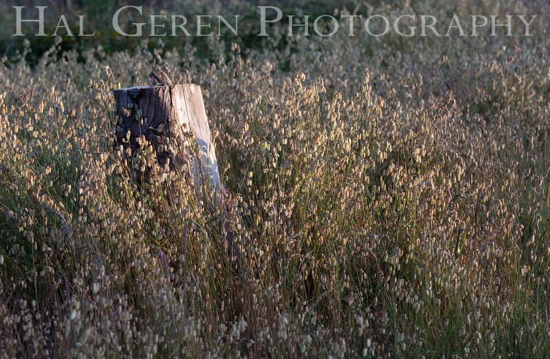 Fort Ross, California<br /> 1606FR-S1