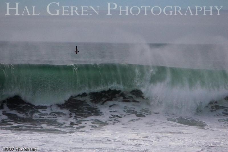 Gulls and Waves<br /> Bodega Bay, California<br /> 0801BB-GAW4E1
