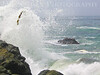 Wave Blast w Kelp<br /> Mendocino, California<br /> 0707M-WBWK1j