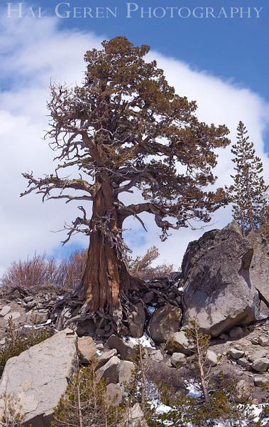 Eastern Sierra Mountains<br /> 1005T-T1