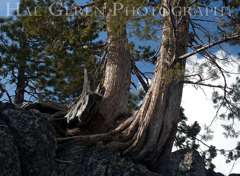 Eastern Sierra Mountains<br /> 1005T-T1j<br /> Photo by Joann Geren