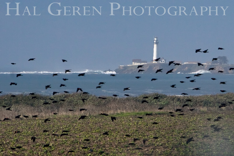 Pigeon Point Lighthouse, California<br /> 0811C-PPL7B
