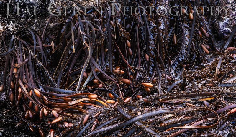 Kelp Debris<br /> Pfeiffer Beach at Big Sur, California<br /> 1212P-K7E1