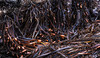 Kelp Debris<br /> Pfeiffer Beach at Big Sur, California<br /> 1212P-K7E1