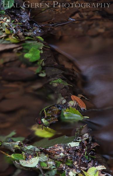 Gazos Creek<br /> 1306PP-S2E1