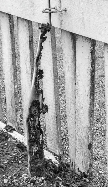 Rusted Fence Post<br /> Pigeon Point Lighthouse, California<br /> 1306PP-F2BW1