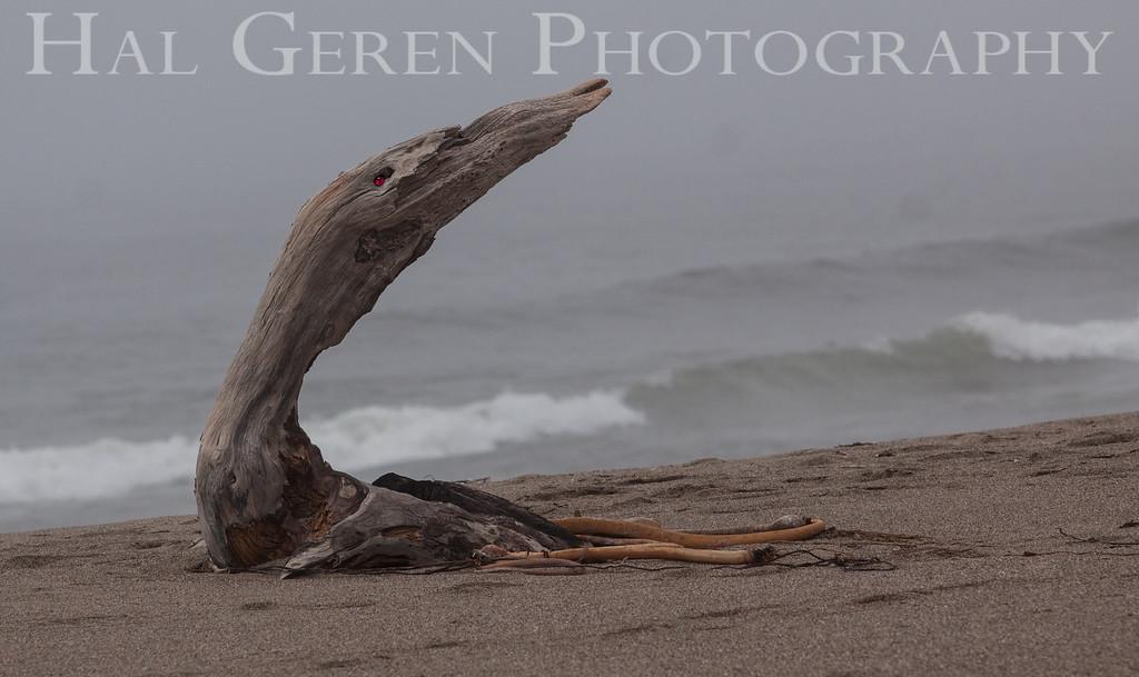 Awakening Driftwood<br /> Point Reyes, California<br /> 1303PR-D3E1