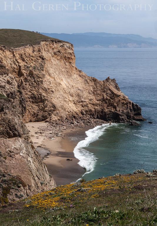 Elephant Seals<br /> Point Reyes, California<br /> 1303PR-ES3