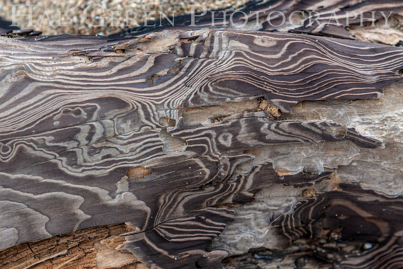 Driftwood<br /> Point Reyes, California<br /> 1303PR-D2
