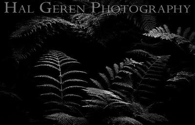 Hidden Ferns Humboldt, California 1808T-F1