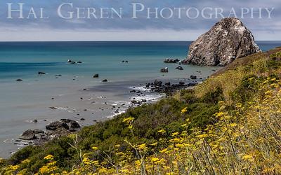 Lost Coast, California 1808T-SS1
