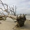 Driftwood Beach, Jeykll Island, GA