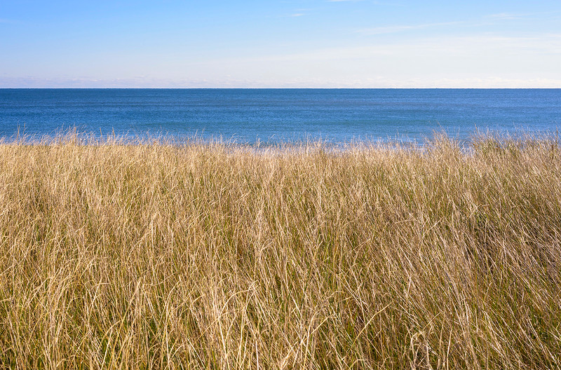 Beach Grass and Ocean