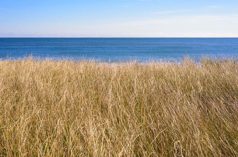 Beach Grass and Ocean