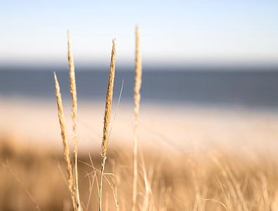 Beach Grass And Bokeh