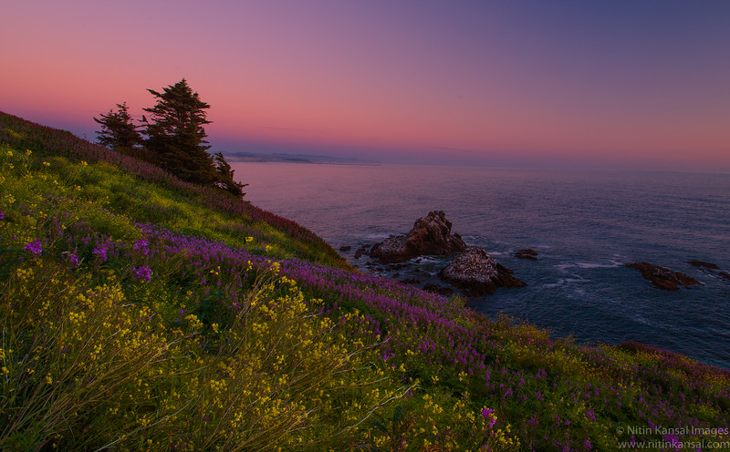 Wildflowers on oregon coast and pastel sunset