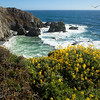 Tomales Point Cove