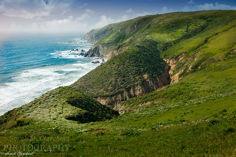Tomales Point Coast
