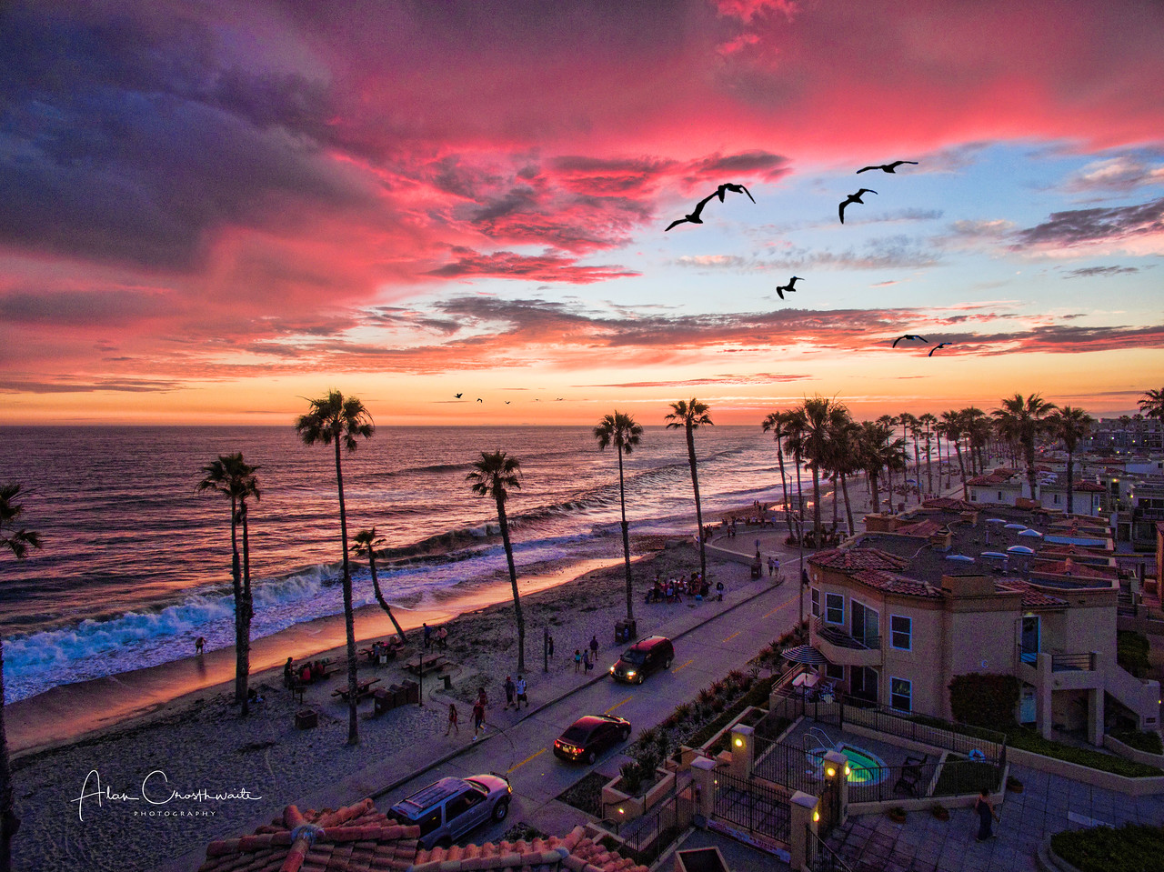 """""""Seabird Sunset"""""""