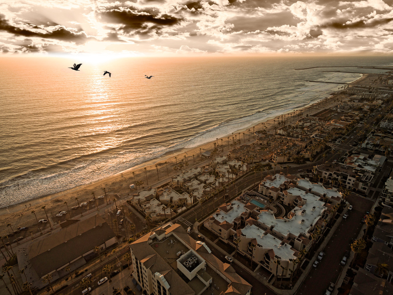 """Pelicans above Oceanside"""