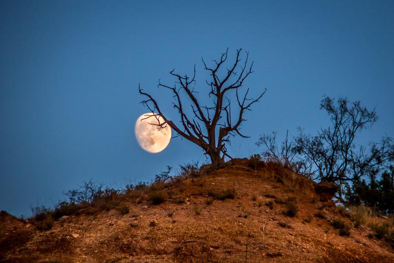 Canyon Moon 2