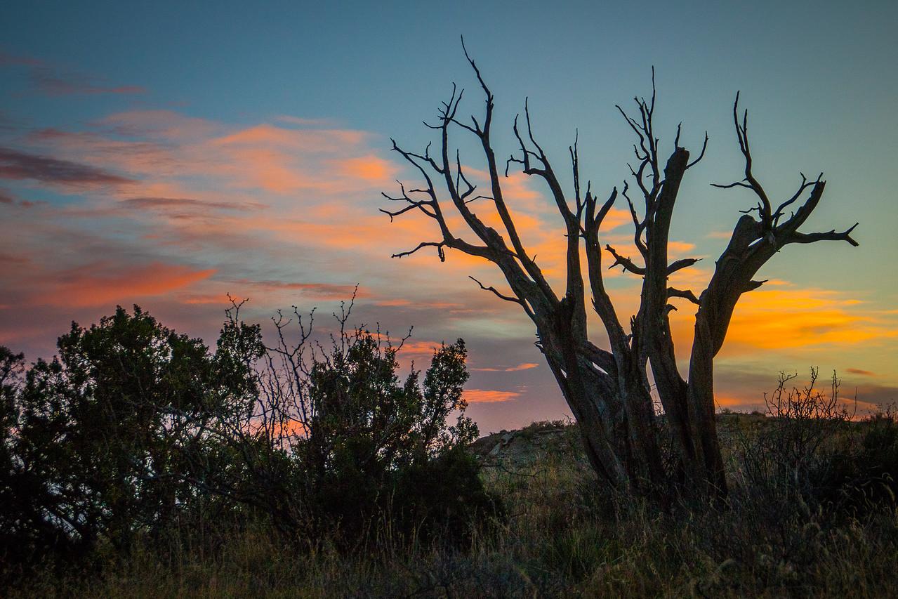Juniper Sunset