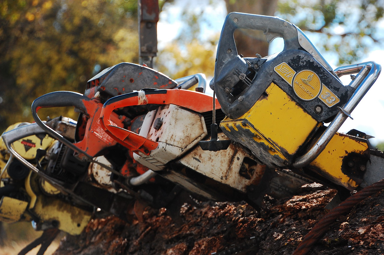 I love eclectic shit like this.  Totally random.  Just some old chainsaws stuffed into a redwood log, on the side of the road.