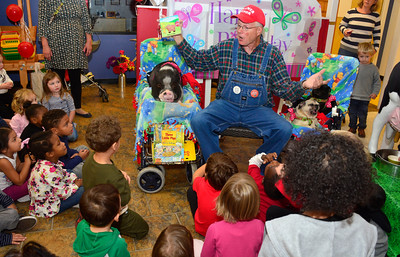 "10/13/2016 Mike Orazzi | Staff Farmer Paul Minor while celebrating Daisy the Pig's 8th birthday party at the Imagine Nation Museum Early Learning Center in Bristol Thursday afternoon.  Children presented Daisy with homemade cards and sang ""Happy Birthday."""