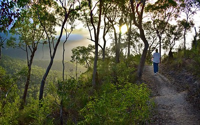Into the Sun, Cardwell Walking Track.