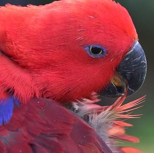 Cape Tribulation Birdlife. 2