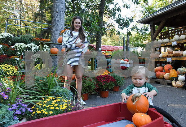 10/02/17 Wesley Bunnell | Staff Griffin Linehan, age 1, helps his mother Megan Linehan pick out pumpkins to decorate their house on Monday afternoon at Karabin Farm in Southington.