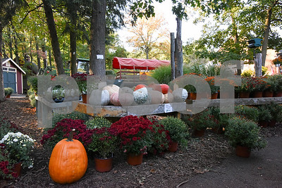 10/02/17  Wesley Bunnell | Staff  Unusual decorate pumpkins at Karabin Farm in Southington on Monday afternoon.