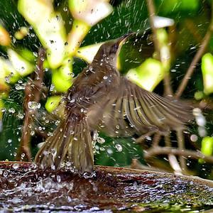 'Splashing Out.'