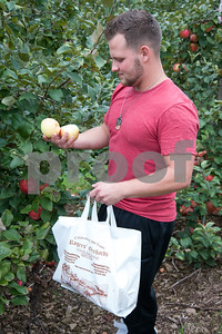 09/21/18  Wesley Bunnell | Staff  Krzysztof Kasinski selects Honey Crisp apples for a homemade pie on Friday September 21 at Rogers Orchards in Southington.