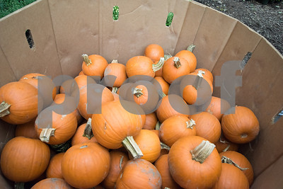 09/21/18  Wesley Bunnell | Staff  Small pumpkins for sale at Karabin Farms in Southington on Friday September 21.