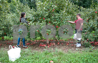 09/21/18  Wesley Bunnell | Staff  Kaylee Pawlak, L, and boyfriend Krzysztof Kosinski select Honey Crisp apples for homemade pies on Friday September 21 at Rogers Orchards in Southington.